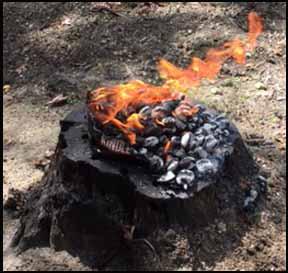 Burning Stump
