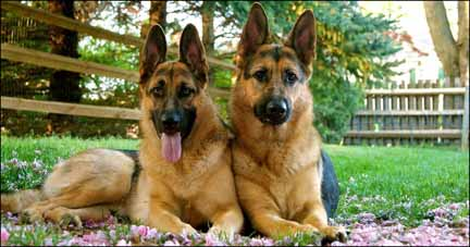 Two GSD